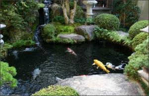 jasa pembuatan taman kolam