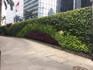 Vertikal garden Jakarta barat