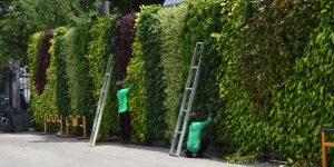 Perawatan Vertical Garden