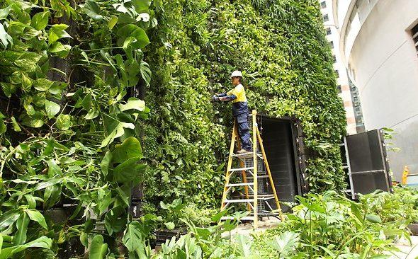 Maintenance Vertical Garden