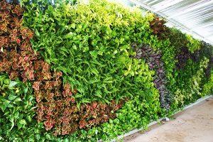 Taman Vertical Garden Tangsel